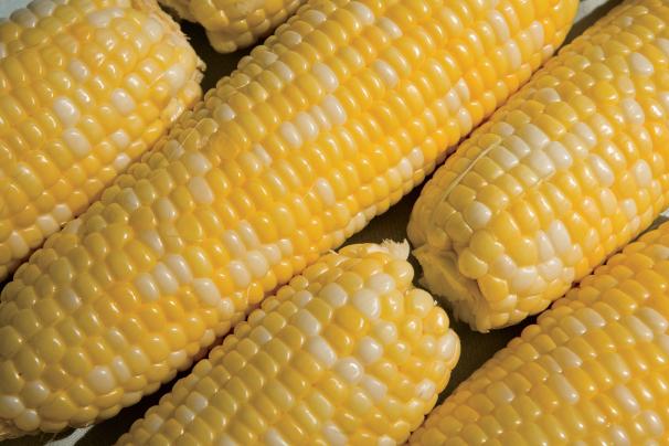 Sweet Corn Blues Festival