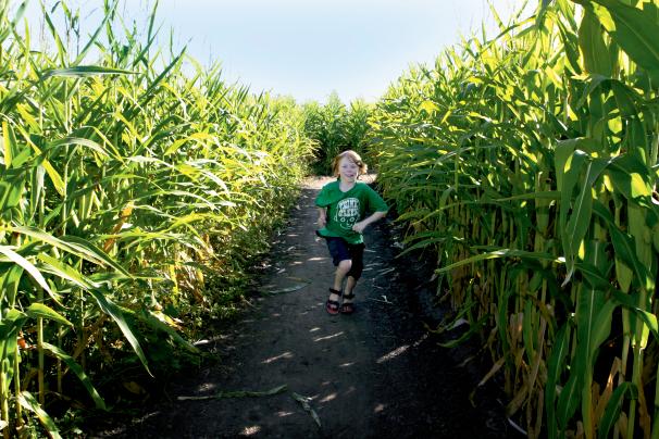 Corn Mazes in Illinois
