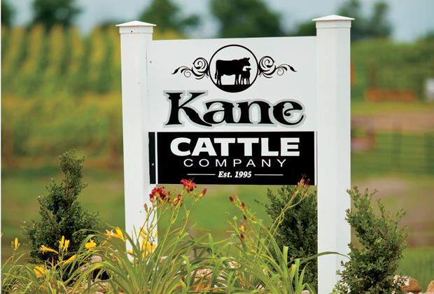 Kane Cattle