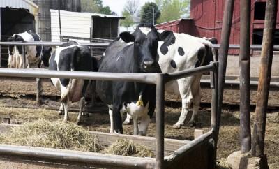 large animal vets