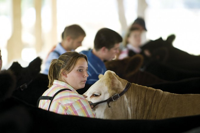 Showing Animals at Illinois State Fair