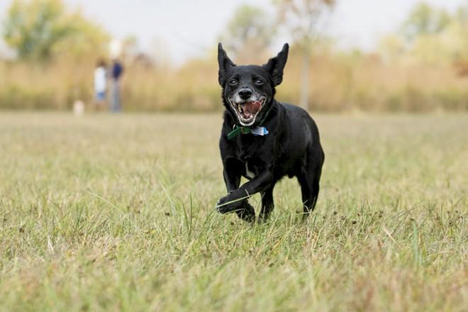 Healthy dog running