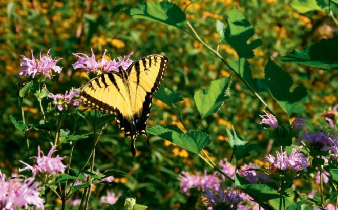 Douglas Hart Nature Center in Mattoon, Illinois