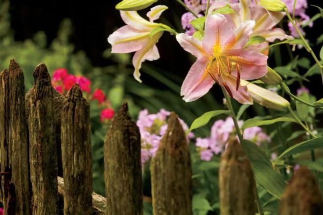 Elkhart Hill, Illinois flowers