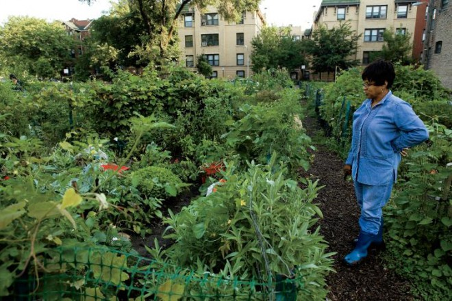Chicago Community Gardens