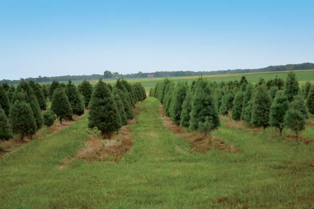 Shenandoah Tree Farm in Alma