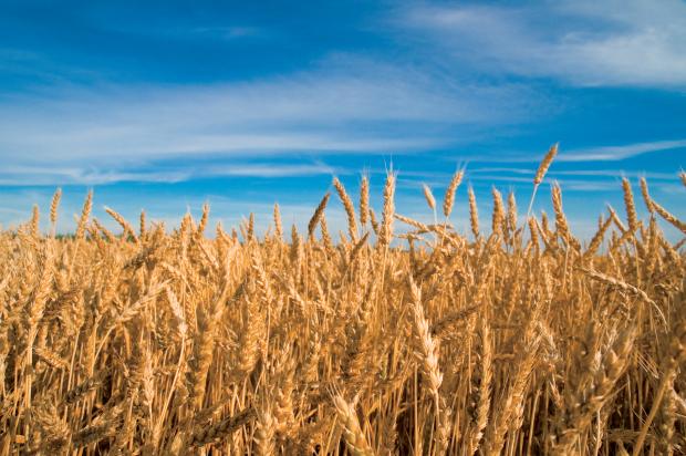 Illinois drought on food prices