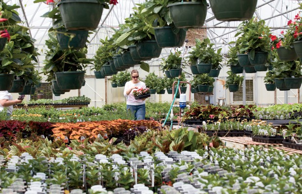 Nursery Industry in Illinois