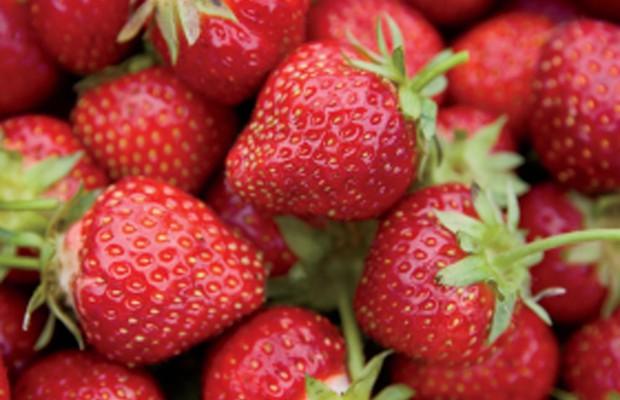 Millcreek Farm Strawberries