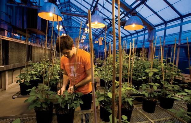 Soybean Sustainability