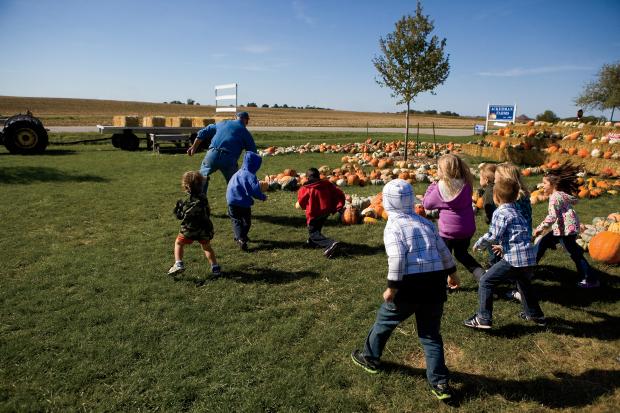 Illinois Pumpkins