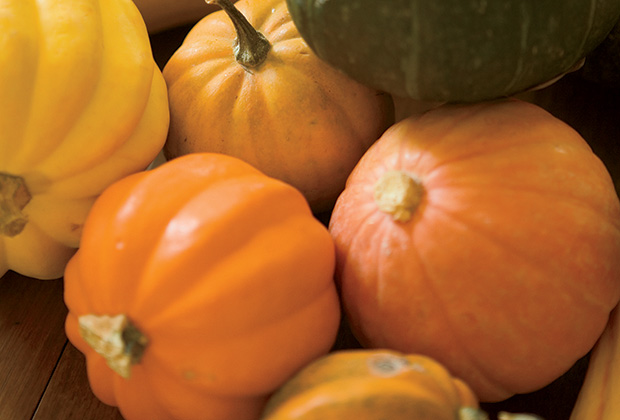 Squash Recipes