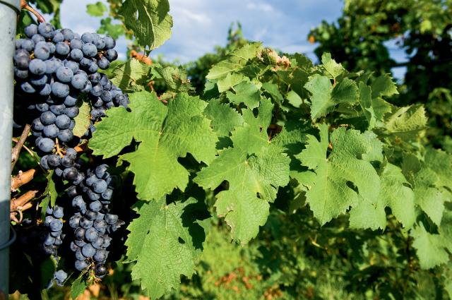 Castle Finn Vineyard and Winery
