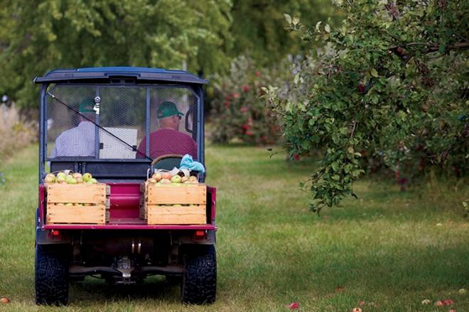 Illinois apple orchard