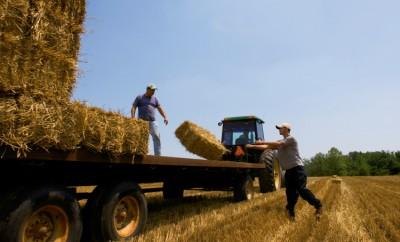 Farm Policy