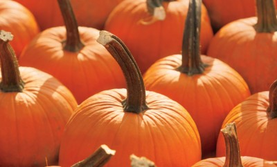 Illinois pumpkin farms
