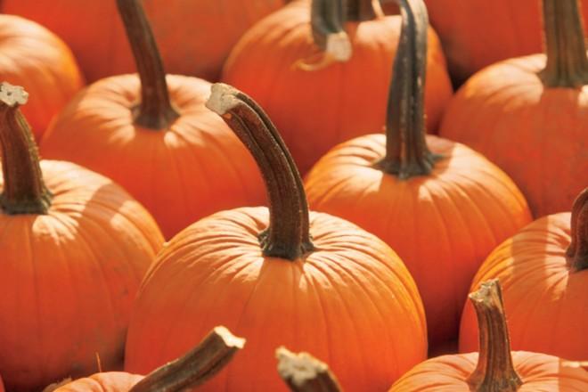 Illinois pumpkin farms
