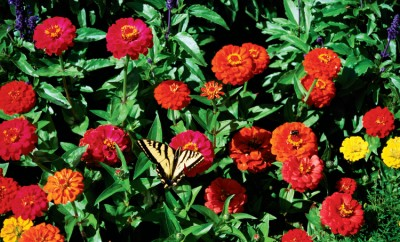 latin flower names