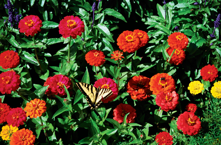 Botanical plant names a lesson in latin for Garden plants names and pictures