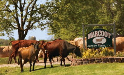 Marcoot Jersey Creamery