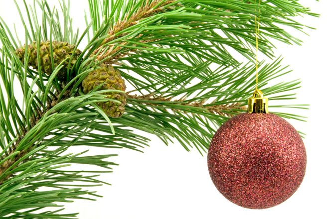 branch with red bauble over white