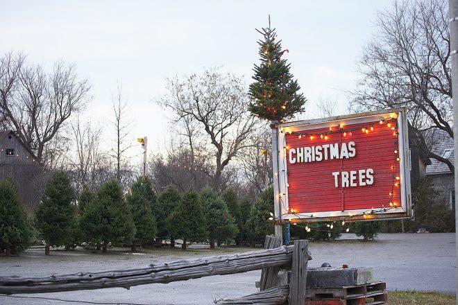 Christmas tree selection 3