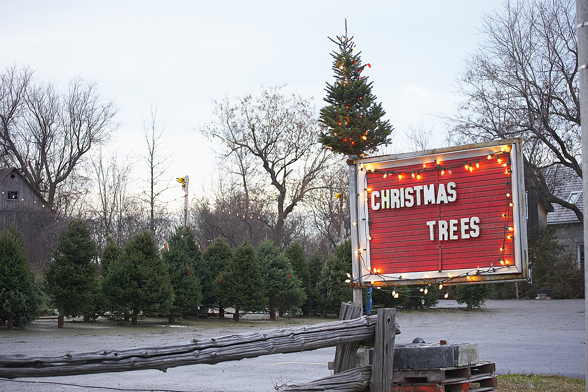 How To Pick The Perfect Illinois Christmas Tree