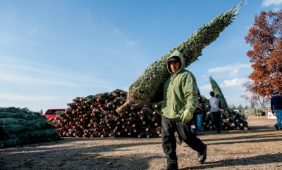 Christmas Tree Farms