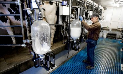 digital dairy farm