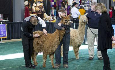 National Alpaca Show