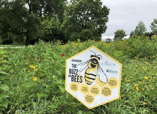 Jasper County pollinators