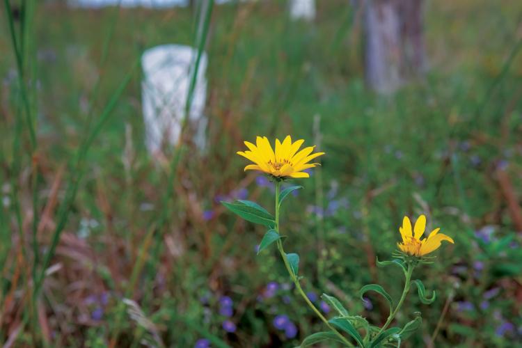 cemetery prairies