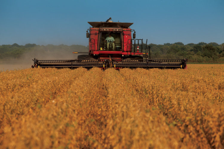 Soybean harvest is a fall favorite