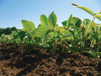 Illinois' first soybeans