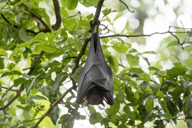 Bats are sleeping by turning them upside down.