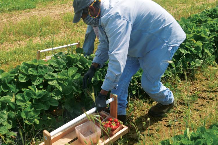 coronavirus farmers adapt
