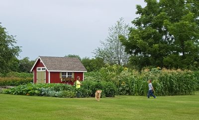 joanie's garden