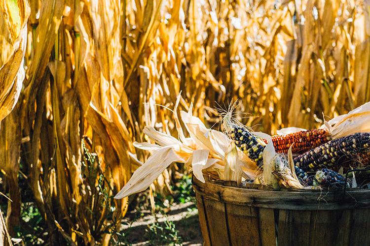 harvest terminology