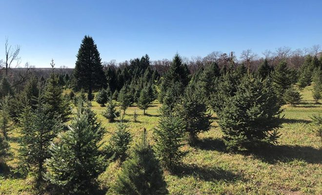 Illinois Christmas tree farm