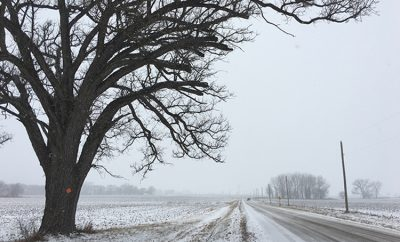 love of the land; winter farm